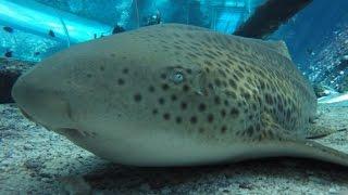 Shark in captivity gives