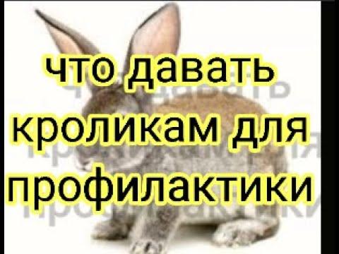 , title : 'Что давать кроликам для профилактики
