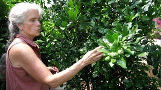 Growing Tropical Fruit in Canada