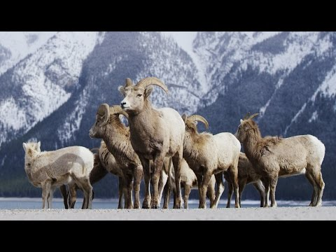 נופי השלג המרהיבים של הפארק הלאומי באנף
