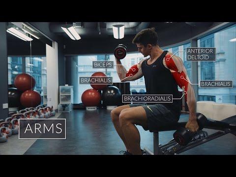 Les muscles du dos et le cou le renforcement