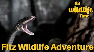 FItz Wildlife Adventures TV Show FWA GIRAFFE SEG 3
