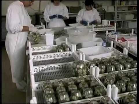 Trattamento di un fungo di aglio di unghie