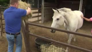 Take This Job: Horse boarding