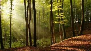 Релакс, музыка для души, звуки исцеляющей природы для расслабления и спокойного сна.