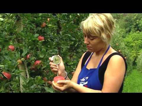 Die Welt des Südtiroler Apfels g.g.A.