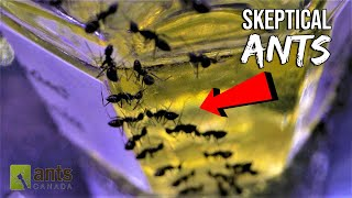 "Skeptical Ants Doubting the Colony ""Rumors"" (Hilarious Ant Story)"
