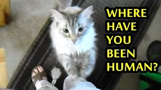 Cats Welcoming Owners Home Compilation 2015 [NEW] - Video Youtube