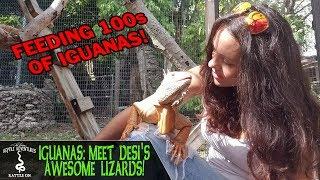 IGUANAS! MEET DESI'S AWESOME LIZARDS! (Iguana care and feeding)
