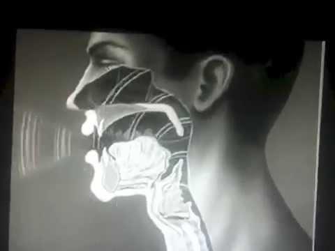 Correttore di bozze di risposte di cipresso magnetiche portanti di dottori