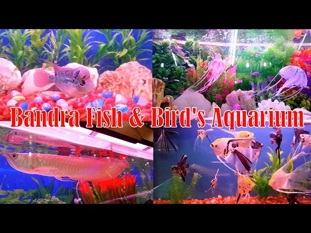Tropical Fishes or Accessories Shop in Mumbai | At Cheap Price | Bandra Fish & Bird's Aquarium