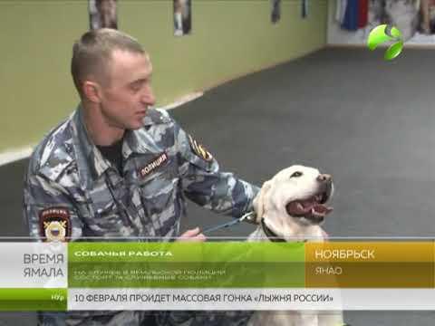 Полицейские псы Ямала оттачивают навыки службы в Ноябрьске
