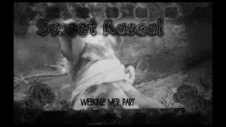 Sweet Rascal // Webkinz MEP part 14