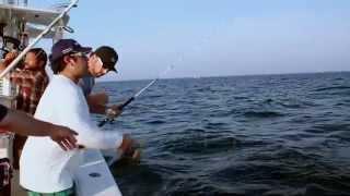 Fish Mavericks Gill misses fish