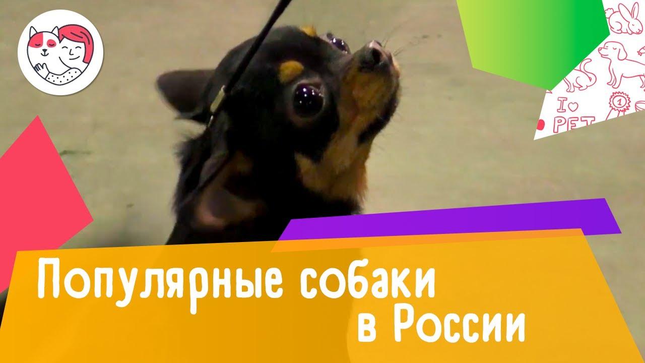 5 самых популярных собак в России