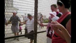 Joining Families at the Border (UMTV)