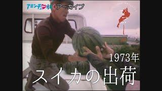 1973年 スイカの出荷【なつかしが】