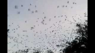 preview picture of video 'Loros en Parque Santander en Leticia, Colombia'