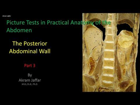 Test obrazkowy z anatomii brzucha - ściana tylna (część 3)