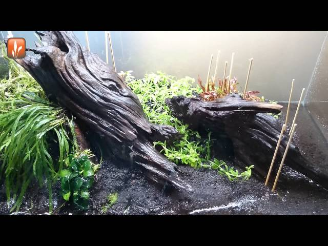 "Aquascape timelapse ""The making of Vibrance"""