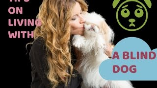 Tips on Living With A BLIND dog