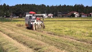 倒伏した稲刈りコンバインが上手に刈り取っていく