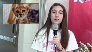 cheetah endangered