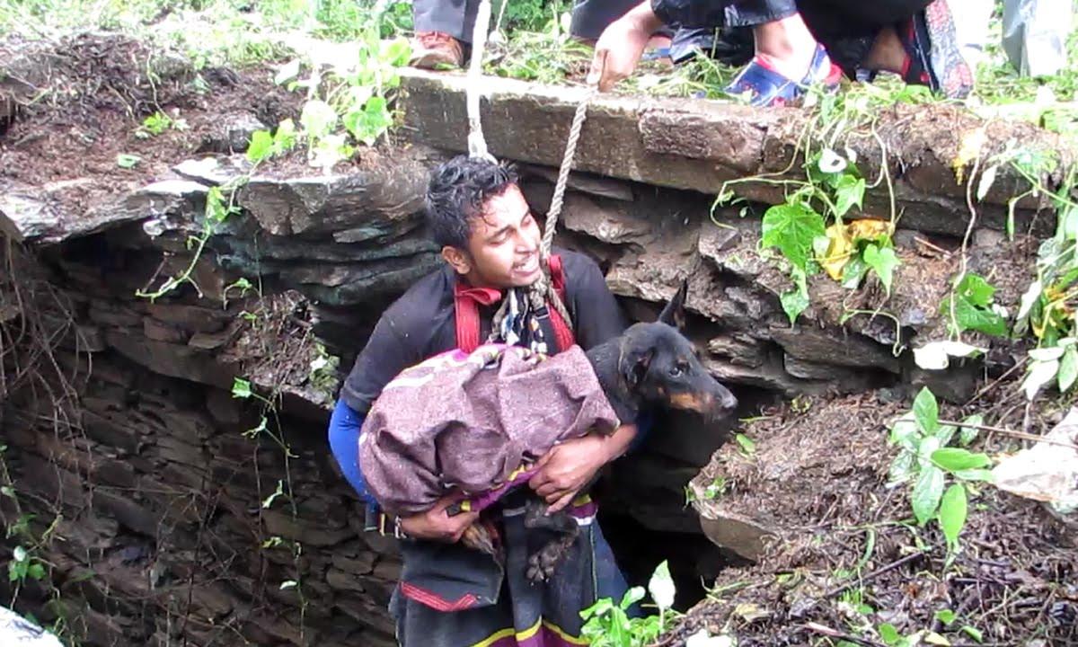 Спасение собаки, упавшей  в колодец, в Индии