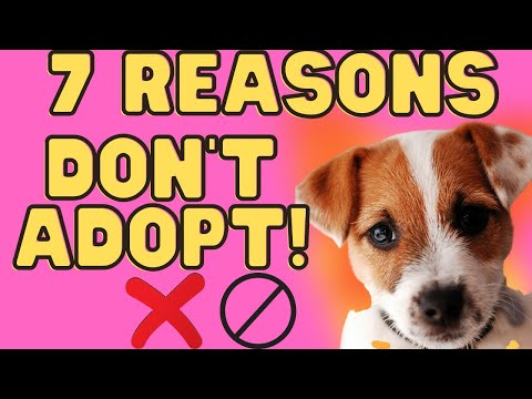 7 Reasons Not To Adopt A Jack Russell Terrier