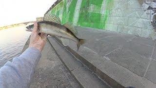 Рыбалка где можно поймать щуку в киеве