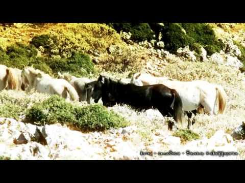 Τα άγρια άλογα του Αίνου [video]