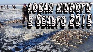 Как ловить миногу в финском заливе