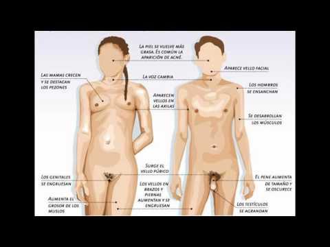 El ungüento farmacéutico del acné