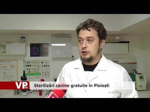 Sterilizări canine gratuite în Ploiești