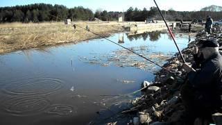 рыбалка-   Лов   Густеры