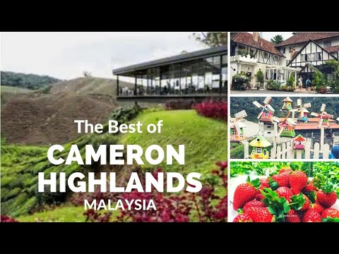THE best of Cameron Highlands Malaysia
