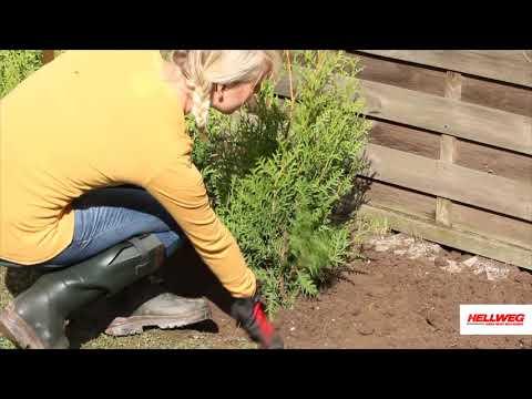 Hecke pflanzen | Schritt-für-Schritt-Anleitung