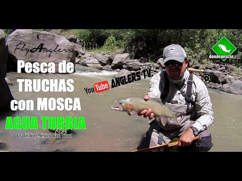 Pesca de TRUCHAS CON MOSCA en Aguas Turbias / Fly Fishing Wild Trout México 10