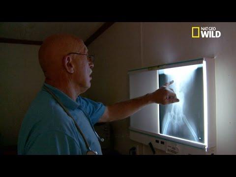 Prostatite traitement schéma posologique