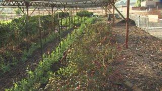 Arizona Worm Farm helps promote organic, sustainable gardening