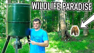 BUILDING A WILDLIFE PARADISE! (What Lives Here?)