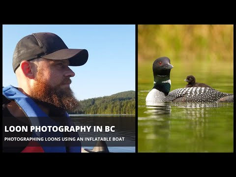 , title : 'Loon Photography in British Columbia - Photographing Loons From an Inflatable Boat (2020)