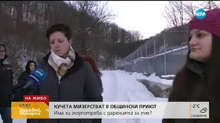 Кучета мизерстват в общински приют - Здравей, България (16.01.2019)