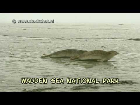 Wadden Sea on UNESCO World Heritage list