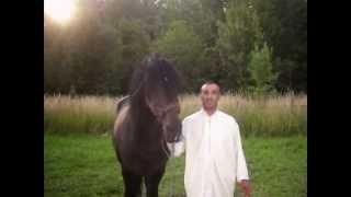 preview picture of video 'fantasia a meknes préparation tbourida'