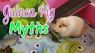 9 Myths About Guinea Pigs