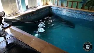 Dog Pool : nage soutenue pour Freesby !