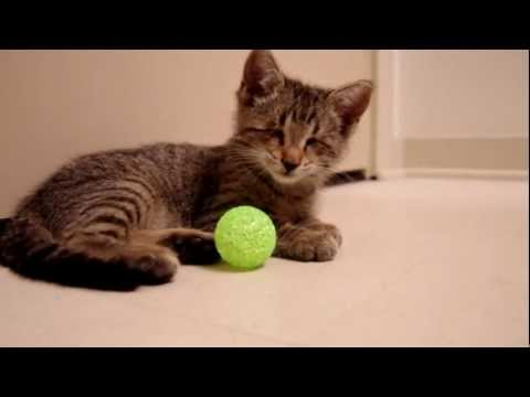 Blind Kitty's First Toy