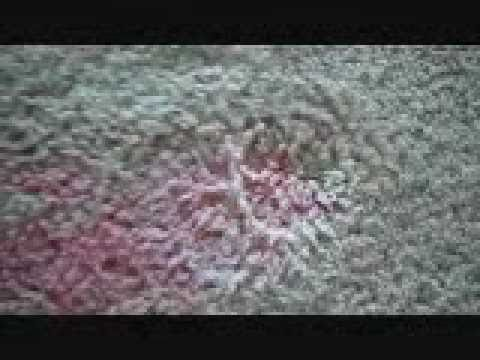 How To Remove A Red Kool Aid Stain From Carpet - Fast & Easy