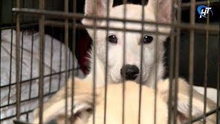 У жительницы Батецкого забрали часть животных в стационар фонда «Спасение»